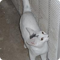 Adopt A Pet :: mo - Pensacola, FL