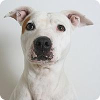 Adopt A Pet :: Janie - Redding, CA
