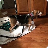 Adopt A Pet :: Trudy - Chesterfield, VA