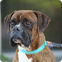 Adopt A Pet :: Tank - Alameda, CA