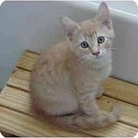Adopt A Pet :: Sandy - Fort Lauderdale, FL