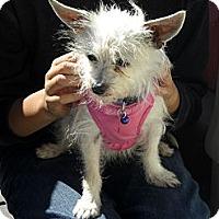 Adopt A Pet :: Tinkerbell - Rescue, CA