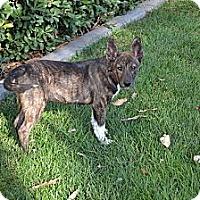 Adopt A Pet :: Chance - Torrance, CA
