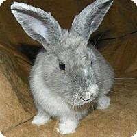 Adopt A Pet :: Dorian - North Gower, ON
