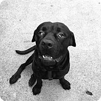 Adopt A Pet :: Titan - Arlington/Ft Worth, TX
