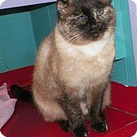 Adopt A Pet :: Siama - Dover, OH