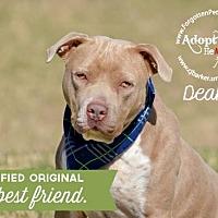 Adopt A Pet :: Deakon - Pearland, TX