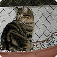 Adopt A Pet :: Colin - Naples, FL