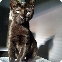 Adopt A Pet :: Willow - Colmar, PA