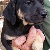 Adopt A Pet :: Monkey - Gainesville, FL