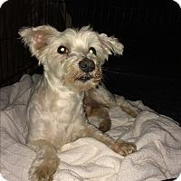 Adopt A Pet :: Brodie - Houston, TX