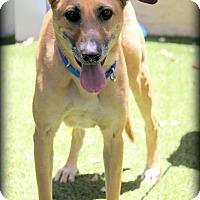Adopt A Pet :: Mortimer - Ft. Lauderdale, FL