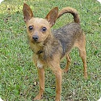 Adopt A Pet :: Lewis - Mocksville, NC