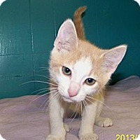 Adopt A Pet :: Dusty - Dover, OH