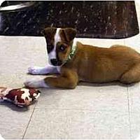 Adopt A Pet :: Merlin - Washington, NC