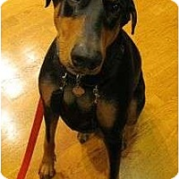 Adopt A Pet :: Lady--adopted!! - New Richmond, OH