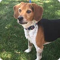Adopt A Pet :: Mackey - Phoenix, AZ