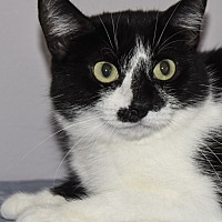 Adopt A Pet :: Eleanor Rigby - Wayne, NJ