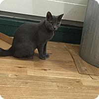 Adopt A Pet :: Rowena - Speonk, NY