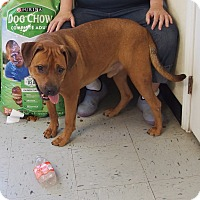 Adopt A Pet :: Anthony - WISCONSIN - Wood Dale, IL
