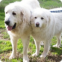 Adopt A Pet :: GANNON & GABLE - Granite Bay, CA
