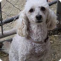 Adopt A Pet :: Roxy - Tucson, AZ