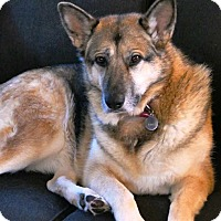 Adopt A Pet :: KIra - Pleasant Grove, CA