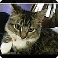 Adopt A Pet :: Jennipurr - Orange, CA