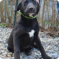 Adopt A Pet :: April - Danbury, CT