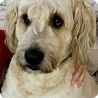 Adopt A Pet :: Kumik - Gapland, MD