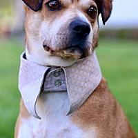Adopt A Pet :: Cannes - San Diego, CA