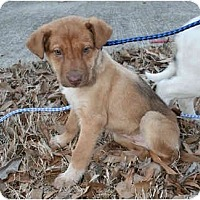 Adopt A Pet :: Sandy-ADOPTED! - kennebunkport, ME
