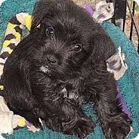Adopt A Pet :: Goober - La Habra Heights, CA
