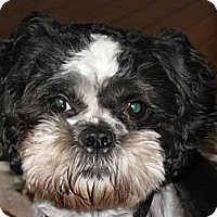 Adopt A Pet :: Gizmo - South Amboy, NJ