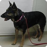 Adopt A Pet :: Cain - Gary, IN