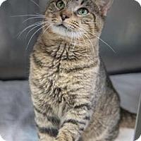 Adopt A Pet :: Simba - Merrifield, VA