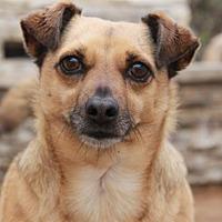 Adopt A Pet :: Hooper - El Segundo, CA