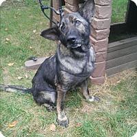 Adopt A Pet :: Abraham - Louisville, KY