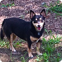 Adopt A Pet :: Fifi-sweetest girl in world - Pewaukee, WI