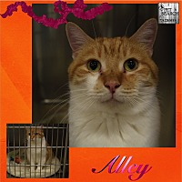 Adopt A Pet :: Alley - Washington, PA