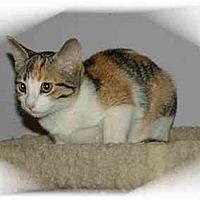 Adopt A Pet :: Bonnie - Montgomery, IL