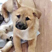 Adopt A Pet :: Dora (fostered in SC) - Cranston, RI