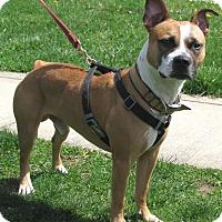 Adopt A Pet :: Mason - New Kensington, PA
