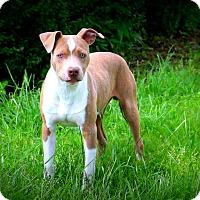 Adopt A Pet :: Mr.Muggles - Glastonbury, CT