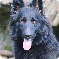 Adopt A Pet :: Jade - Nashville, TN