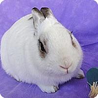 Adopt A Pet :: Berlioz - Los Angeles, CA