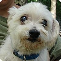 Adopt A Pet :: Joey - Afton, TN