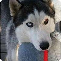 Adopt A Pet :: Nanook - Belleville, MI