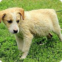 Adopt A Pet :: Hogan - Staunton, VA