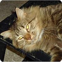 Adopt A Pet :: Milton - Elmira, ON
